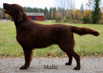 Malte20140525