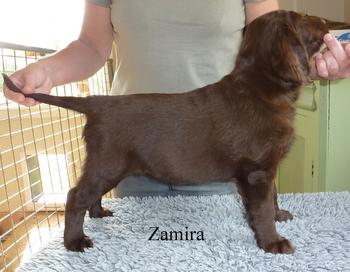zamira1