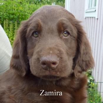 zamira2